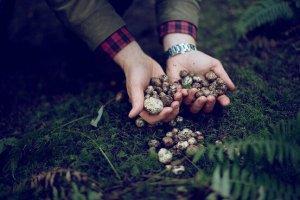 Freshly harvested Oregon truffles Photography by Laura D'Art for WSJ. Magazine