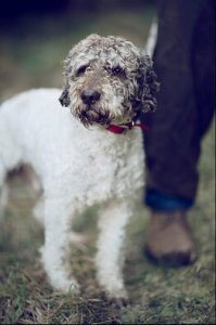 Tom, the truffle dog Photography by Laura D'Art for WSJ. Magazine