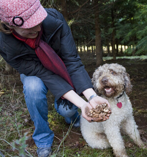 Truffle Dog Training - Image by Andrea Johnson