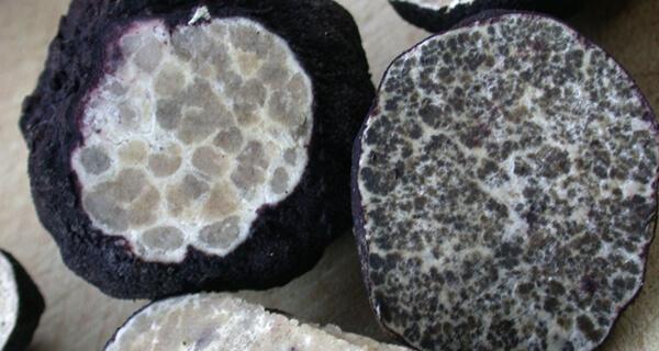 Ripening Truffles