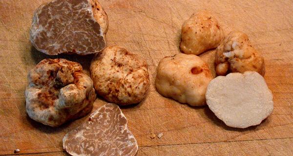 Unripe truffles