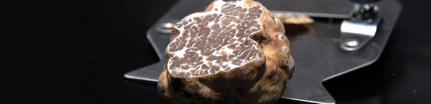 Introduction to Truffles